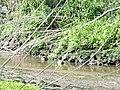 Naturschutzgebiet Heuckenlock 21.05.2014 Phase 86.JPG