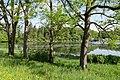 Naturschutzgebiet Lengwiler Weiher.jpg
