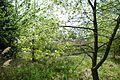 Naturschutzgebiet Mittleres Innerstetal mit Kanstein - Innerste bei Rhene - Uferwald (2).JPG