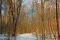 Nescopeck State Park Hardwood Zone (1).jpg