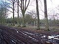 New deer fencing in Grovely Woods - geograph.org.uk - 350633.jpg