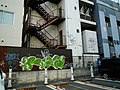 Nipponbashi - panoramio (3).jpg