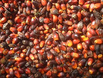 Agriculture in Cameroon - Palm kernels in Tayap