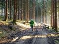 Nordic Walking im Wald.JPG