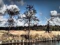 Norfolk Broads - panoramio (14).jpg
