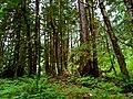 North Cascades National Park (9290002689).jpg