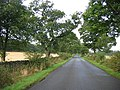 Oaklined road. - geograph.org.uk - 57714.jpg