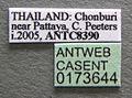 Oecophylla smaragdina casent0173644 label 1.jpg