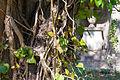 Old trunk on graveyard (24529513569).jpg