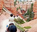 On the Trail, Bryce Canyon NP 2009 (28983029775).jpg