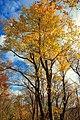 Open Canopy (10567463275).jpg
