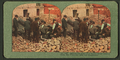 Opening the safes of a Market Street Jewelry Store, San Francisco, after the Catastrophe, from Robert N. Dennis collection of stereoscopic views.png