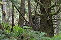 Oregon coast - Saddle Mountain (14394313438).jpg