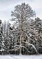 Ostrovsky District, Kostroma Oblast, Russia - panoramio.jpg