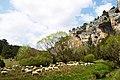 Ovejas - panoramio (2).jpg