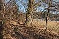 Pörtschach Winklern Quellweg Wanderweg Eiche am Waldrand 19022017 6324.jpg