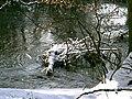 POL-Rezerwat przyrody Buczyna nad Słupią 044s.jpg