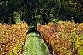 Paarl vineyard-001.jpg