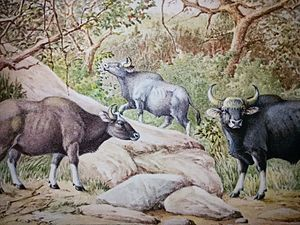 Zoological Survey of India - Indian Gaur (Bos gaurus) the mascot of ZSI. Source: ZSI library painting collection