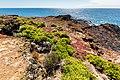 Paisaje en Punta Pitt, isla de San Cristóbal, islas Galápagos, Ecuador, 2015-07-24, DD 51.JPG