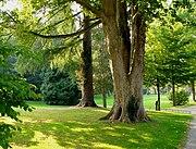 Palaisgarten4