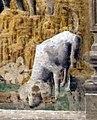 Palazzo schifanoia, salone dei mesi, 09 settembre (ercole de' roberti), borso in parata 04 cane 2.jpg