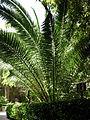Palm plant 2016 (498327893).jpg
