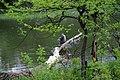 Panoramio - V&A Dudush - Рыбак на Донце.jpg