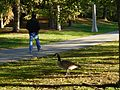 Parc Montcalm-Tache - 25.jpg