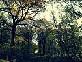 Parc naturel régional de la Haute Vallée de Chevreuse, Foret de Rambouillet - Route de la vallée du Petit Parc, Automne.jpg