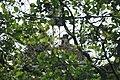 Park Cronesteyn DSC05368 (14519136354).jpg