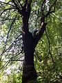 Park dworski Czachórskich (9).jpg