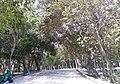 Parque Ecológico Bosque dos Sonhos - João Pessoa (PB).jpg