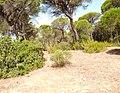 Parque de Doñana 20210610 64.jpg