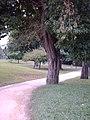 Parquenegrahipolita arbol01.JPG