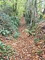Path climbing steeply through woodland on Howle Hill - geograph.org.uk - 609773.jpg