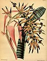 Paxton's flower garden (Plate 77) (9256185360).jpg