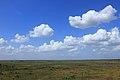 Paynes Prairie observation tower view.jpg