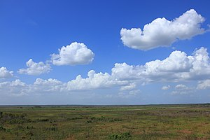 Paynes Prairie Preserve State Park - Looking north from the Prairie observation tower