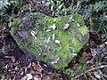 Pedra em forma de coração.jpg