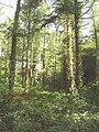 Pencarrow Wood - geograph.org.uk - 51066.jpg