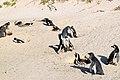 Penguins at Boulders Beach, Cape Town (9).jpg