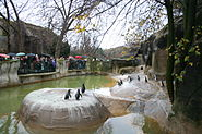 Penguins in the zoo of vincennes