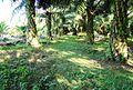 Perkebunan kelapa sawit milik rakyat (72).JPG