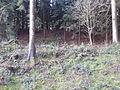 Pfarrerschanze Todtenweis (Römerschanze) 23.jpg