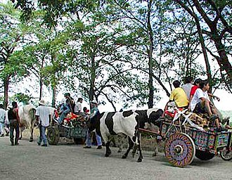 Guanacaste Province - Typical Costa Rican ox-drawn carts carry wood during an annual festival in Nicoya, Guanacaste.