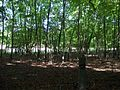 Picked Copse - The Woods Alongside The Road To West Dean - geograph.org.uk - 994172.jpg