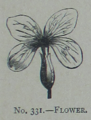Picture Natural History - No 331 - Flower.png