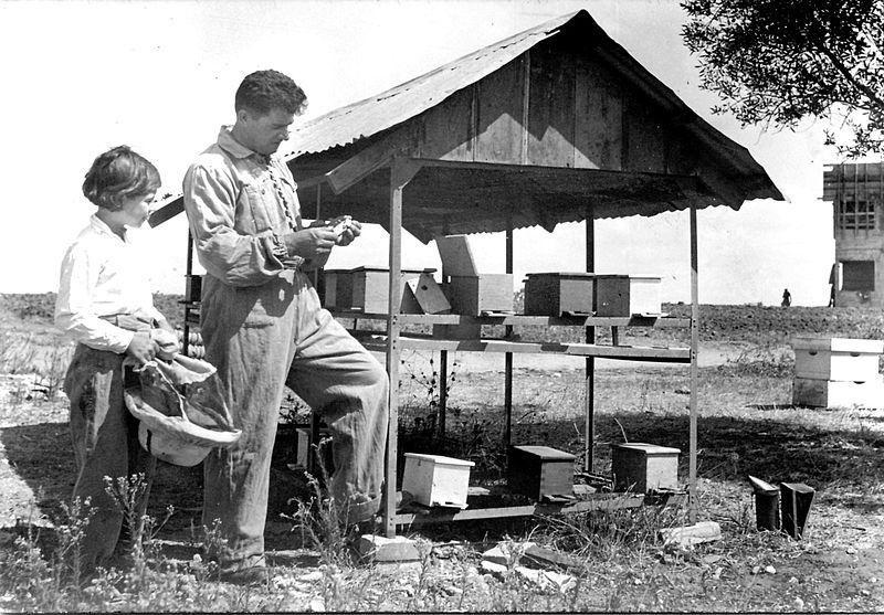 גן-שמואל-כוורות הדבורים 1938