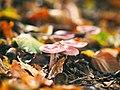 Pilze Nature Bokeh.jpg